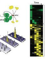 Proteomics identifies DNA repair toolbox