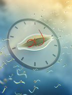 The internal clock of cells orchestrates 25 percent of all protein switches