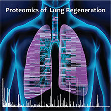 Novel mass spectrometry methods enable for the first time to quantify more than 8,000 proteins in the process of lung regeneration.
