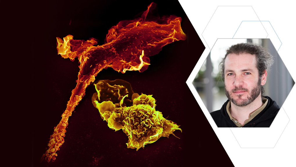 Immunology, Inflammation, Cellular Communication, Proteomics, Systems Biology