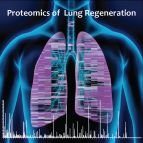 Time- and compartment-resolved proteome profiling of the extracellular niche in lung injury and repair