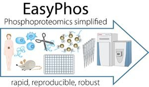 High-throughput phosphoproteomics reveals in vivo insulin signaling dynamics