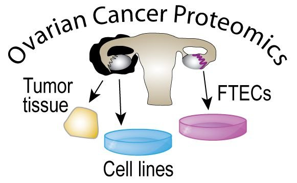 Integrative proteomic profiling of ovarian cancer cell lines reveals precursor cell associated proteins and functional status