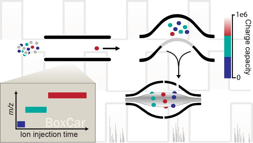 BoxCar acquisition method enables single-shot proteomics at a depth of 10,000 proteins in 100 minutes