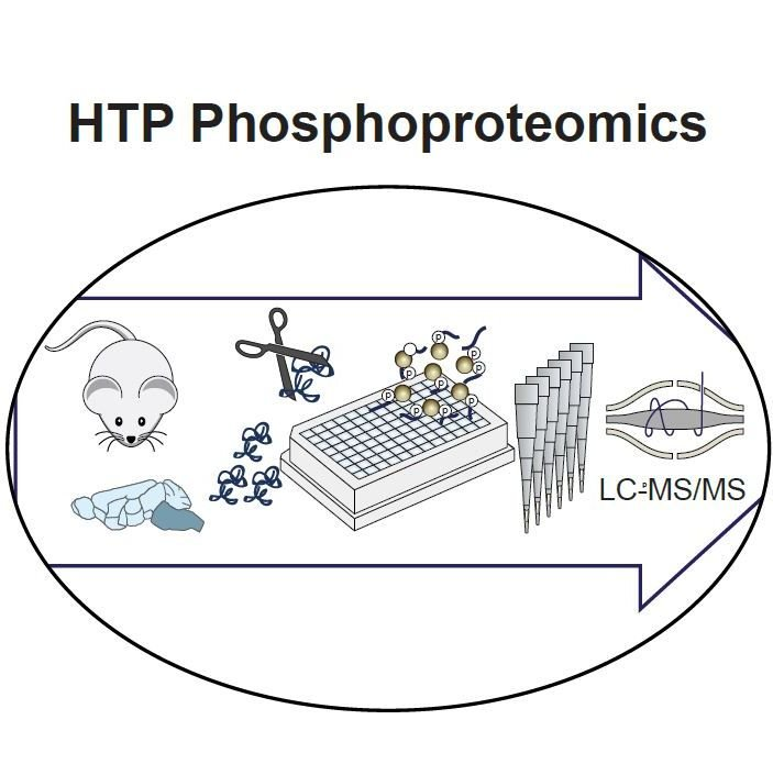 In vivo brain GPCR signaling elucidated by phosphoproteomics