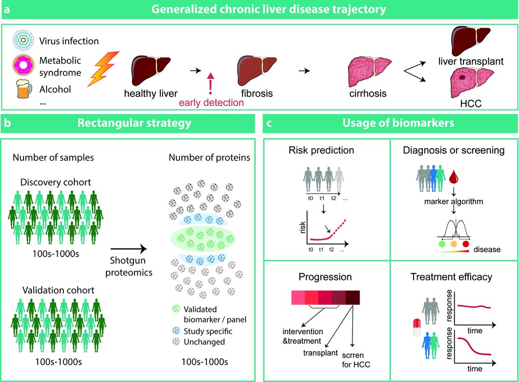 Proteomics in the Study of Liver Diseases